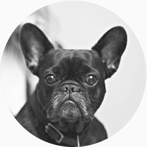 berkley voltage new medias office dog